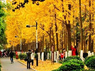杭州秋天最美的10个景点