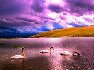 水上芭蕾-天鹅湖