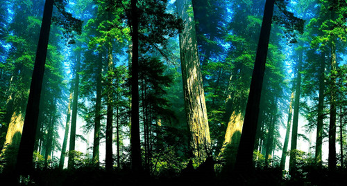 俄远东森林大火肆虐 科普:森林是怎么形成的