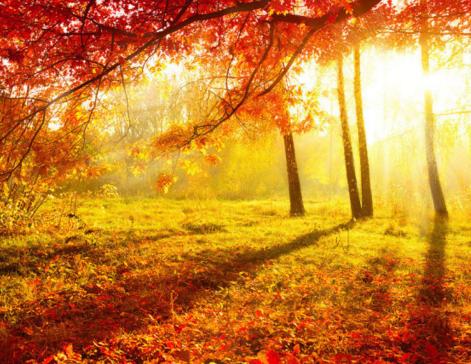 描写秋天的古诗大全_描写秋天的古诗语文老师总结的那些描写秋天