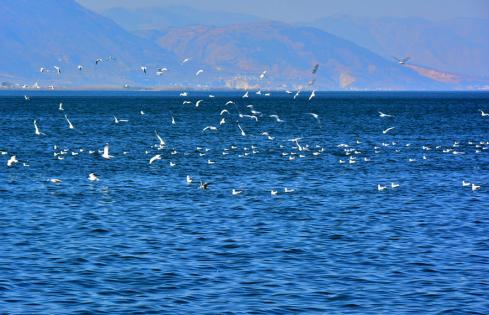 """洱海的风景很好看,透明纯净的海面给人以""""船在碧波漂,人在画中游""""的意"""