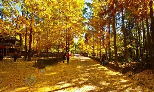 10月适合去哪里旅游? 中国6大最美秋色