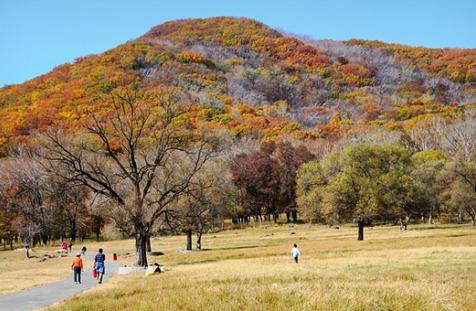 (图:深秋时节,哈尔滨阿城市平山神鹿风景区被美丽的枫叶覆盖)